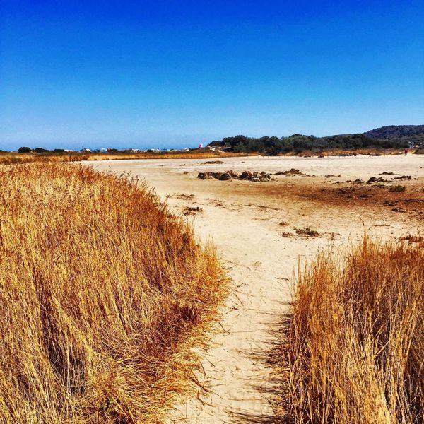 Clear Sky Blue Tranquil Scene Copy Space Tranquility Grass Scenics Dirt Road The Way Forward Footpath Travel Destinations Nature Beauty In Nature Non-urban Scene Day Outdoors Tourism Remote Marram Grass No People