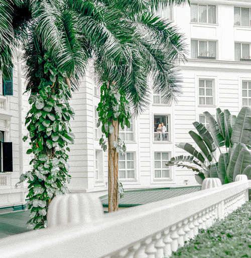 Palm tree by building