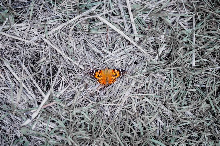 No People Plant Nature High Angle View Beauty In Nature Day Land Close-up Field Flower One Animal Dry Outdoors Animal Themes Growth Fragility Orange Color Invertebrate Animal Insect