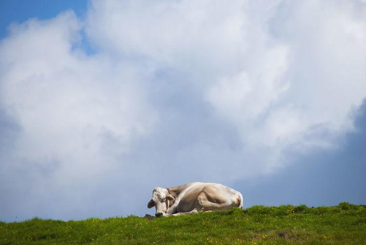Cow Mountain