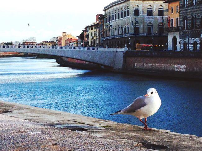 Pisa Ponte Di Mezzo Nature Blue Walking Around EyeEm Best Shots Chilling Arno  Riverside EyeEm Gallery Lungarno Perfect