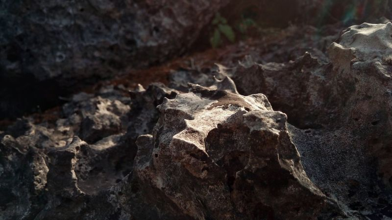 Light Sunlight Contrast Color Rock Detail Stationary By The Force Of Water And Gravity Rigid Crocked Old Eroded Close-up Europe Croatia Crkvice Nature Summer Island Search Hard Access Great Outdoors