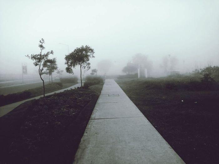 Camino Fog
