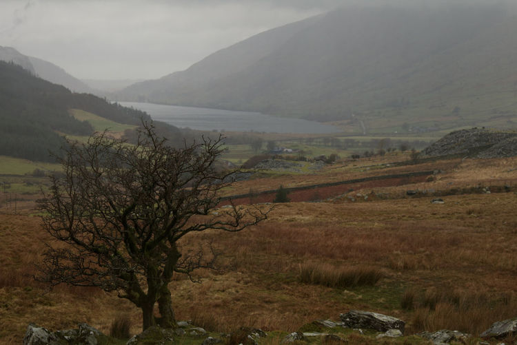 Mountain Welsh Countryside Mountains Wales Mountain Slope Tree Fog Rural Scene Hill Field Landscape Sky Valley Weather Overcast Atmospheric Mood