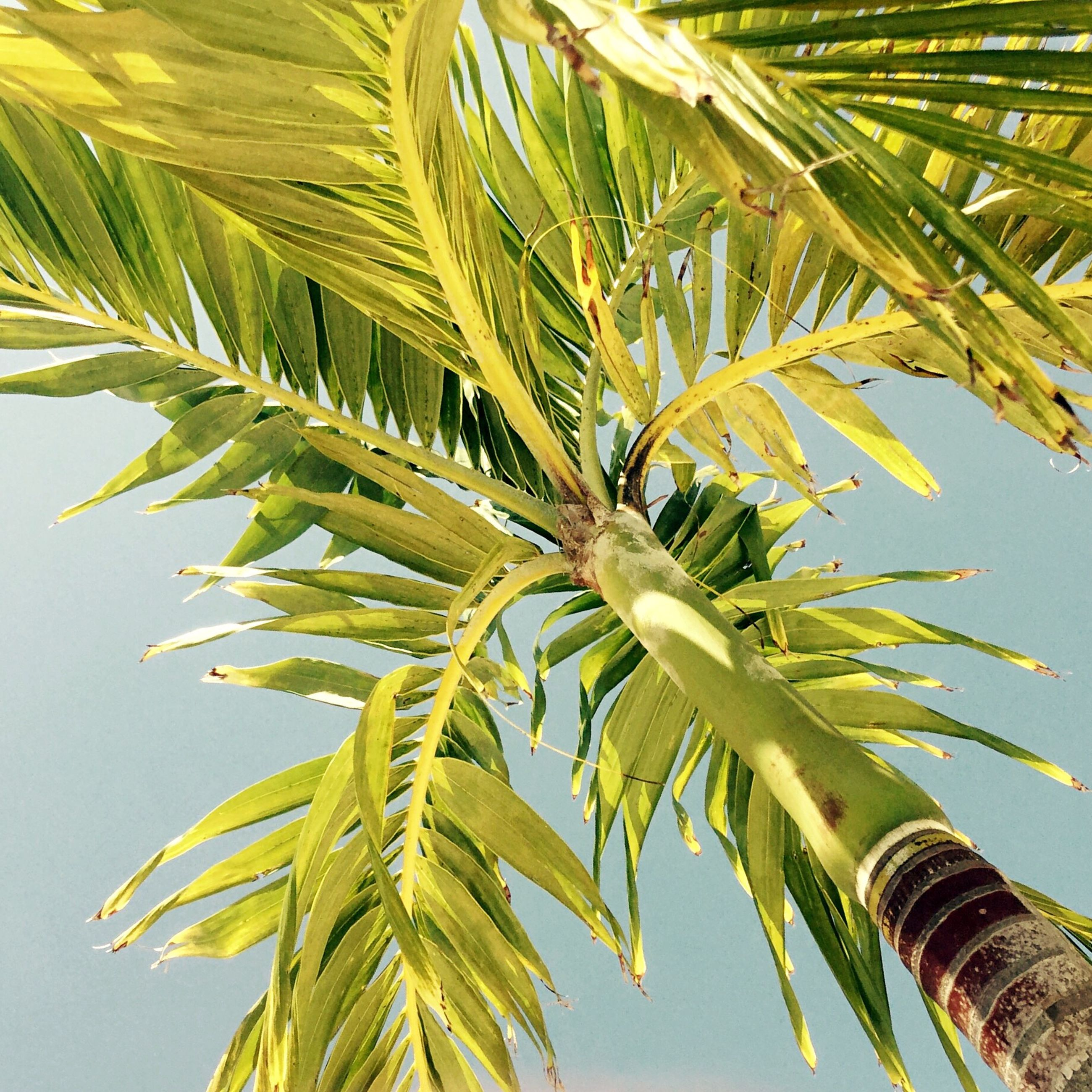 growth, nature, palm tree, no people, beauty in nature, close-up, day, outdoors, sky