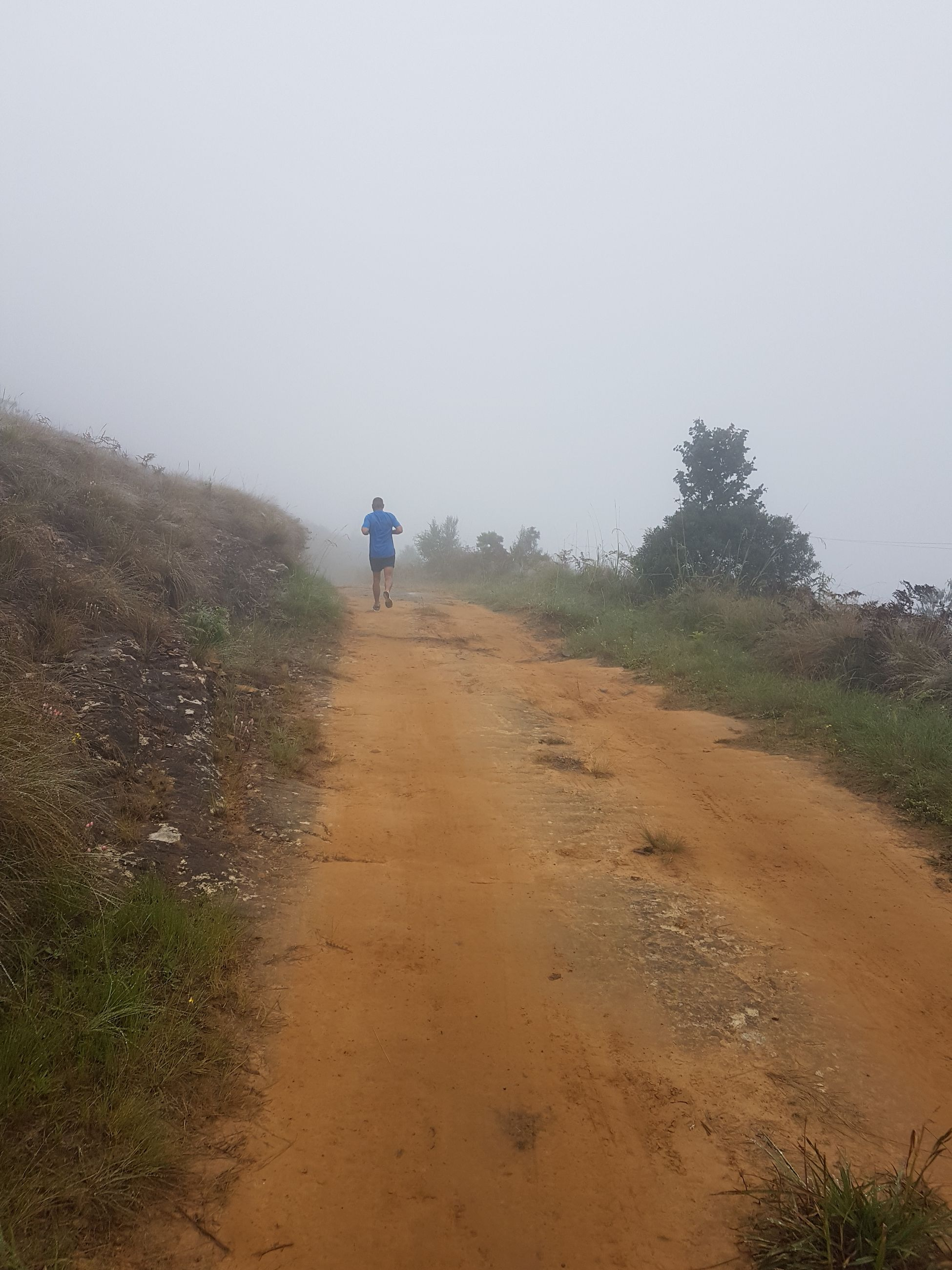 fog, sky, real people, direction, one person, walking, the way forward, nature, lifestyles, non-urban scene, rear view, full length, plant, road, leisure activity, beauty in nature, day, environment, land, outdoors