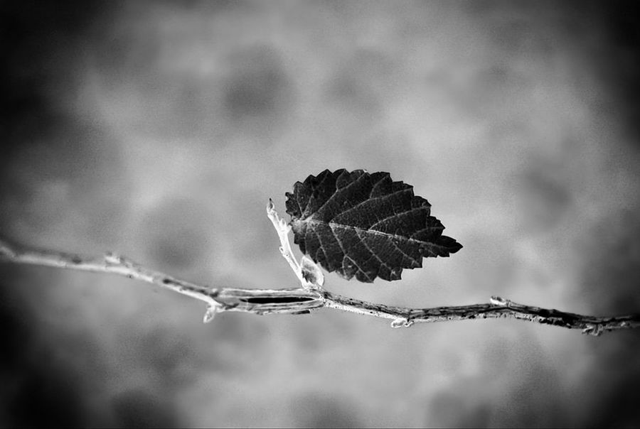 Solitude Blackandwhite Bnw Monochrome EyeEm Best Shots Black And White Mood EyeEm Nature Lover Abstract EyeEmBestPics Dream Contrast EyeEm Selects darkness and light No People Autumn Bird Spread Wings Bird Of Prey Tree Animal Themes Sky