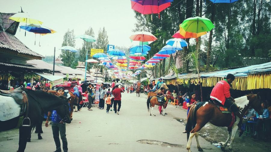 Beautiful city.. Berastagi, North Sumatera, Indonesia People Adults Only Adult Outdoors Day Animal Themes Only Men Sky Berastagi Medan Berastagi, Indonesia Indonesia_photography Indonesian Photographers Collection Indonesian Street Photography Beauty In Nature Eyeem ındonesia Eyeem Market Eyeem Photography North Sumatra North Sumatra - Indonesia Sumaterautara Sumatera Island Horse Photography  Culture And Tradition Karo EyeEm Best Shots - Nature