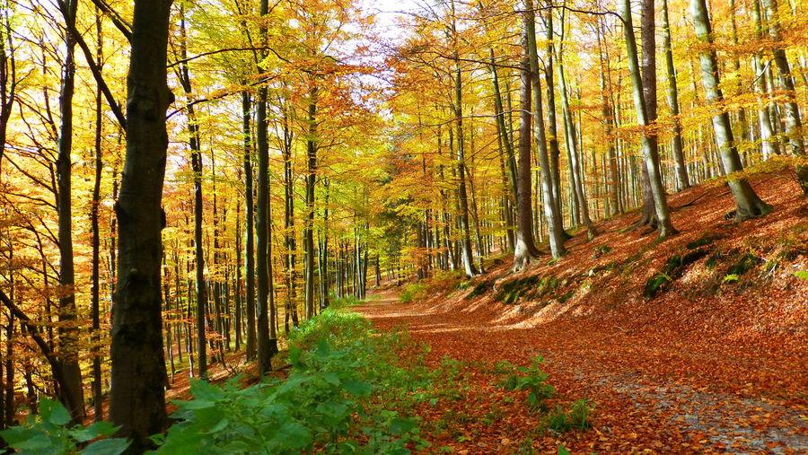 Wald Wood
