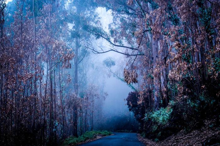#Dark #fog #foggy #foggymountains #forest #madeira #Nature  #portugal #trees #Wood EyeEmNewHere