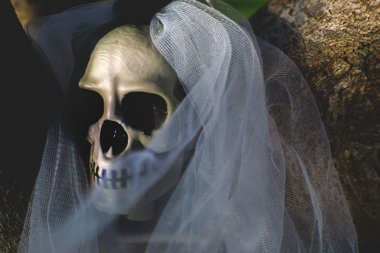 Skull bride at back yard. Backyard Dark Ghost Grass Halloween Holiday Skeleton Skull Bride Backgrounds Bride Costumes darkness and light Day Headshot Outdoors Skull Toy White Yard