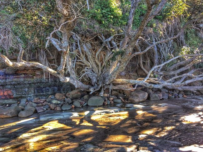 A tree stands strong not by its fruits or branches, but by the depth of its roots. Anthony Liccione Pohutukawa Tree Tree Beauty In Nature Air Roots Beach Photography Cliff Face Hanging On For Dear Life New Zealand Beach Natrual Beauty  Natral Habitat Shadow And Light
