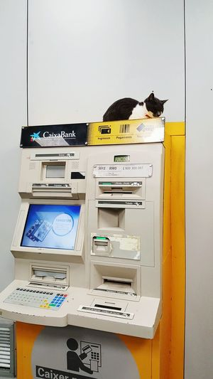 No People Indoors  City Cat Cats Cats Of EyeEm Bank Banking Caixa Caixabank Barcelona Odd Oddities Oddity Animal Animal Themes EyeEm Vision EyeEm Selects Lifestyle Money Atm Filing Cabinet Business Finance And Industry