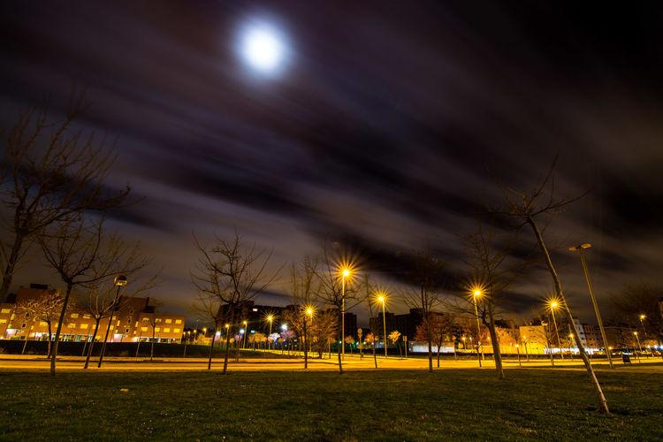 Illuminated street lights by trees against sky at night