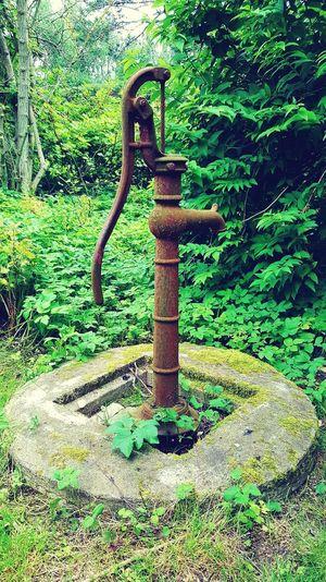Day No People Green Color Outdoors Nature Grass Water Close-up Wasserpumpe historische Wasserpumpe gusseisern