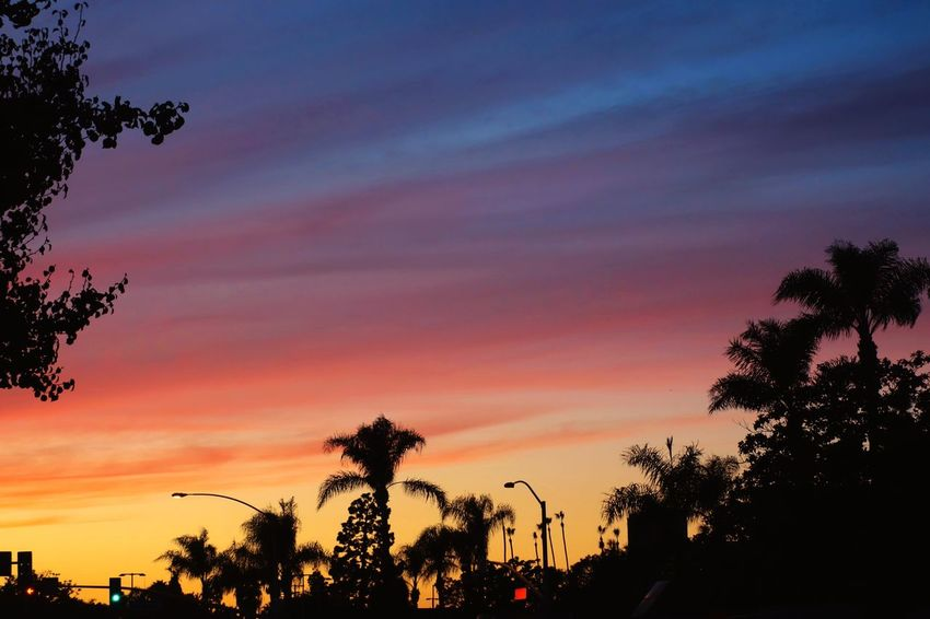 California Dramatic Sky Urban Street Lamps Traffic Lights Palm Trees Yellow Red Multicolored Sky Tree Silhouette Sunset Palm Tree Sky Beauty In Nature Scenics Nature Outdoors Growth No People Cloud - Sky Tranquil Scene Tranquility