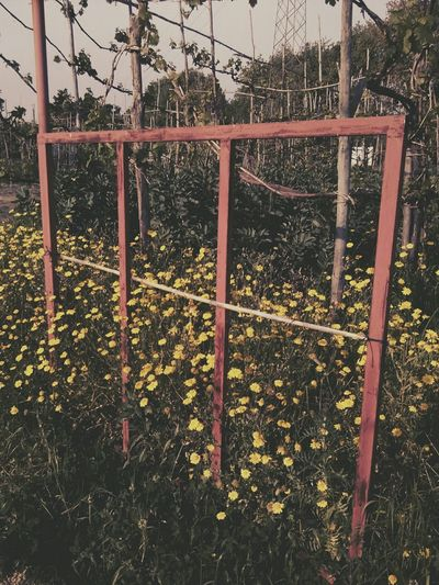 Nature Colorfull Old Gate Immersion Composition Contrast Scenery Photo Vintage