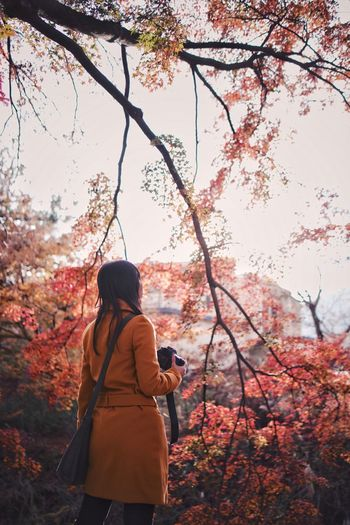 Bokeh Snap Light And Shadow Streetphotography Vscocam Japanese  Tree Real People Plant Lifestyles Leisure Activity Autumn One Person