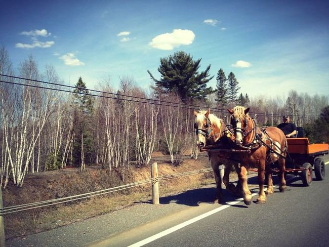 Summer Views Horseandbuggy Highway