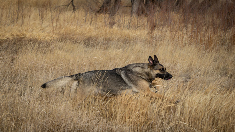 Side view of a dog on ground