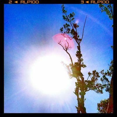 夏天炙熱的太陽~~~🌞🌞🌞 陽光 太陽 亮光 Sunny☀