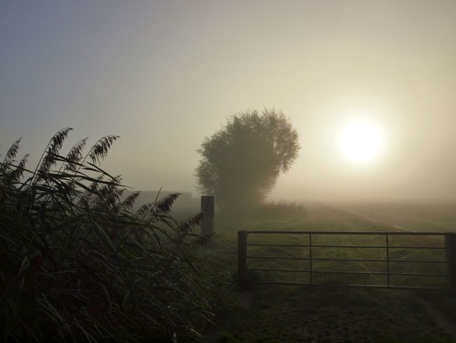050 Sunrise Misty Morning Mist Farmland Tree