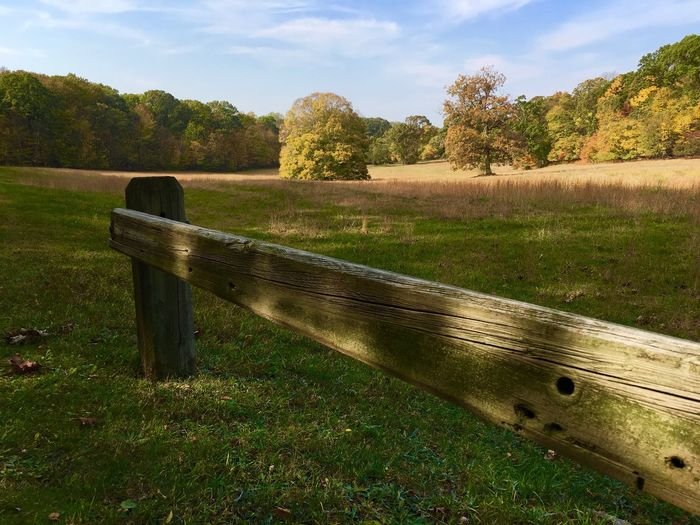 Field Outdoors Nature Day Sky Tree Grass Beauty In Nature No People Caumsett State Park Autumn🍁🍁🍁