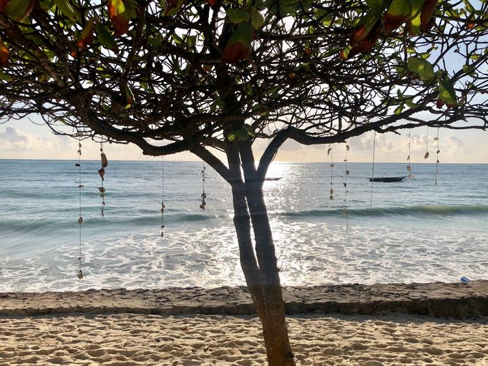 Water Sea Beach Tree Land Beauty In Nature Tranquility Tranquil Scene Sunlight Outdoors Scenics - Nature