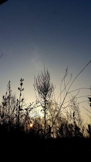 Sunlight Sunshine Sonnenaufgang Landscape Nature Sunset Silhouette Sky Close-up Animal Themes Plant Flower Head Shining