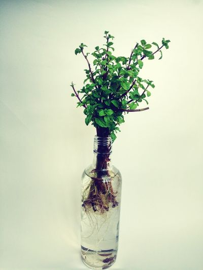save plants,save trees Plants Plant Plants And Flowers Plants 🌱 Plant Life Planting Growing Bottle Botany Biology Tree Trees Trees And Nature Tree Trunk Tree_collection  Green Color Green Greenery New Underwater No People Plant Indoors  Nature Studio Shot Water Leaf