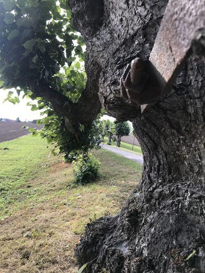 Plant Tree Tree