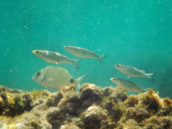 Plemmirio - Pillirina 🐠 Underwater UnderSea Fish Swimming Sea Life No People Animal Themes Nature Animals In The Wild Sea Day Beauty In Nature Outdoors