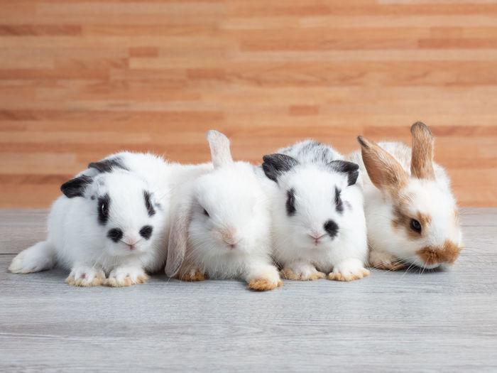 Group of cute