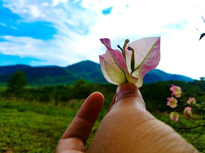 ดอกไม้ (Flower) ดอกไม้ใบหญ้า ดอกไม้กับฟ้างาม Flower Flowers ภูเขา เขาใหญ่ Khaoyai Sky Sky And Clouds ท้องฟ้า