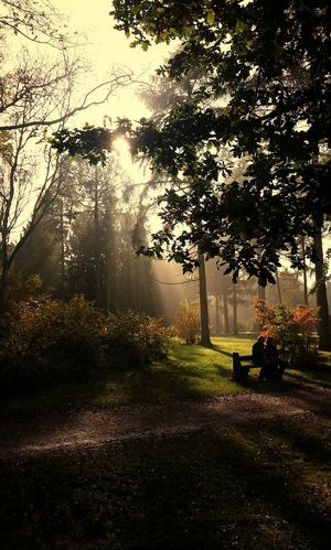 'Sometimes we miss the show because we're facing the wrong direction.' October Day (8 of ?) Two Strangers Exceptional Photographs EyeEm Masterclass Fall Beauty EyeEm Nature Lover Sunlight Through The Trees