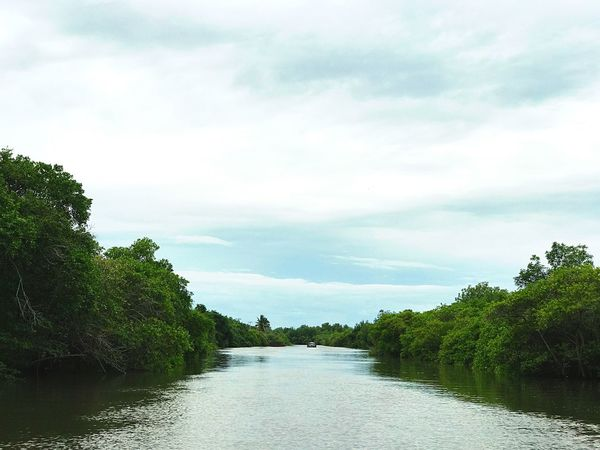 Tree Cloud - Sky Beauty In Nature No People River Outdoors Water Monterrico Guatemala