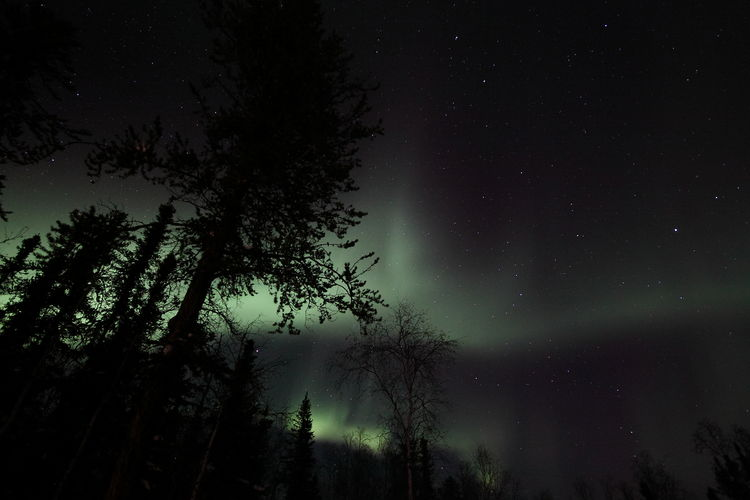 Low Angle View Of Trees In Forest Against Sky At Night