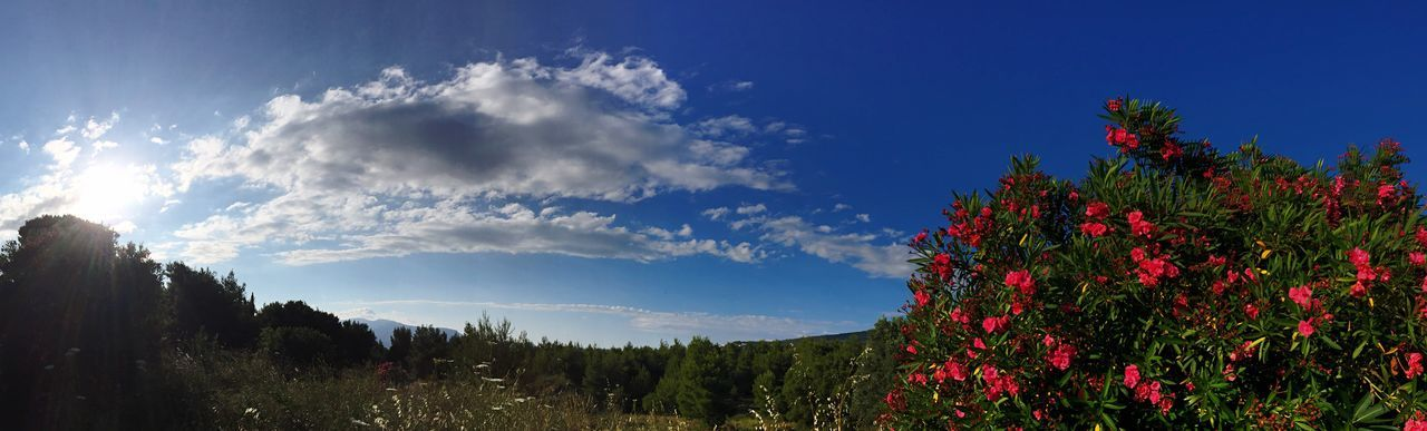 Blue Sky Beauty In Nature No People Morning Sky Mountain Outdoors Tranquil Scene Flower Panoramic Photography Clouds Hiding Sun Sunlight