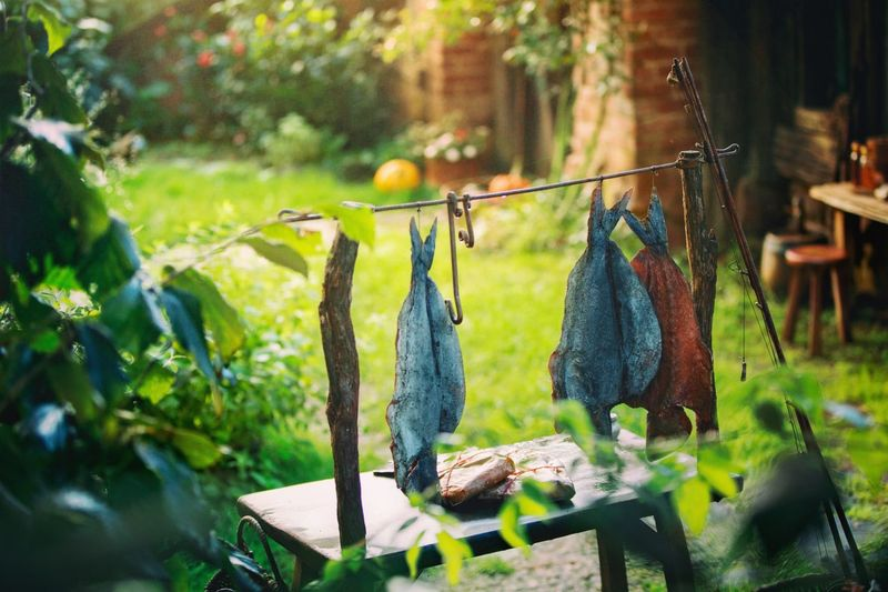 Hobbiton movie set Hobbiton Movie Set Tours Hobbitonmovieset Hobbiton Fish Hanging Fish Movie Prop Newzealandphotography Focus On Foreground Day Plant Selective Focus Nature Tree Wood - Material Close-up Outdoors Clothing Green Color Animal Food And Drink Food Growth Clothesline Vertebrate Leaf