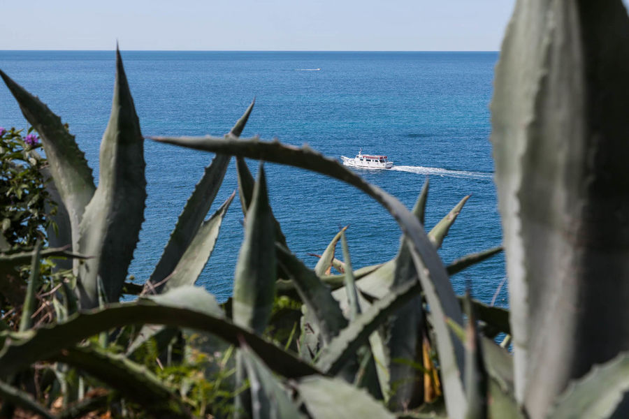 5 Terre Agave Beauty In Nature Boat Close-up Day Horizon Over Water Italy Liguria Mediterranean  Nature Nautical Vessel No People Outdoors Scenics Sea Sky Summer Tourism Tranquil Scene Tranquility Travel Water