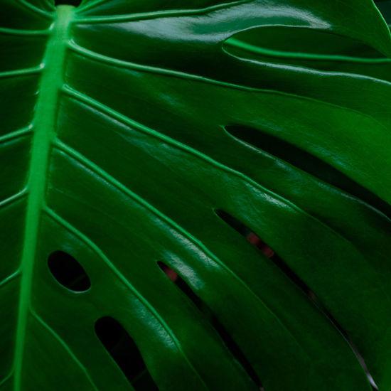 Detail shot of leaf
