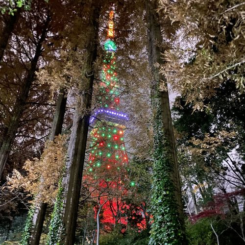 Low angle view of christmas tree in forest