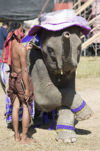 Rear View Full Length Of Trainer With Elephant On Field