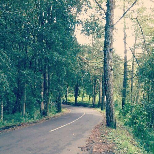 Forest Jungle Forestreserve Tropicalforest rainforest ecopark batur kintamani bali