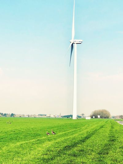 Environmental Conservation Environment Plant Sky Wind Turbine Renewable Energy Fuel And Power Generation Growth Agriculture Day Rural Scene Alternative Energy Land Field Wind Power Green Color Nature Grass Turbine Landscape