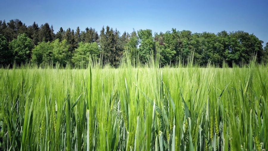 Photographer Picoftheday Photography Photooftheday Naturephotography Photography Plant Growth Field Tree Land Tranquility Green Color Beauty In Nature Landscape Tranquil Scene Day Sky Nature Rural Scene No People Environment Grass Farm Agriculture Scenics - Nature