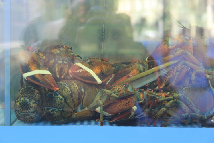 Transparent Animal Fish Tank Water Animals In Captivity Animal Themes Glass - Material No People Marine Tank Nature Close-up Aquarium Window Indoors  Lobster Cooking Culinary Chef Food And Drink Fishing Industry Market Food Alive  Delicious