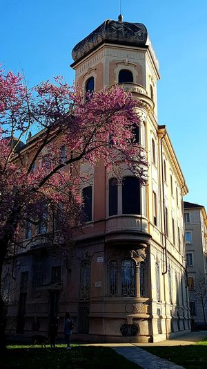Turin Italy My City City Life Flower Tree Purple Flower Architecture_collection Old Buildings Angle Perspective Sunlight Light And Shadow Walking Around Blue Sky Pedestrian Zone Beautiful City Sky Architecture Building Exterior Built Structure Tall - High Building Story Urban Skyline Cityscape