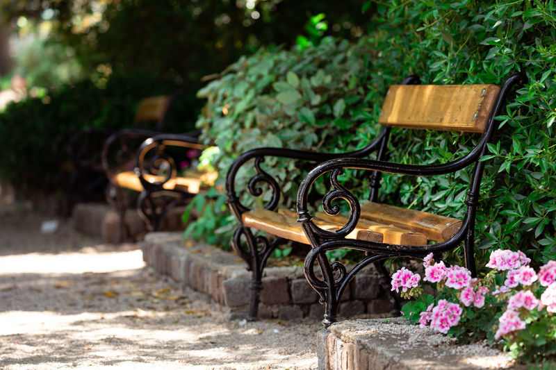 Croatia Bench Park Time Vintage Simplicity Flower Close-up Plant Blooming Growing In Bloom Park Bench Plant Life Growth Botany