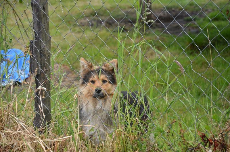 Dog on grassy field